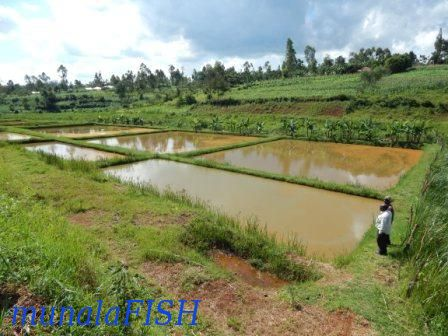 SMALL FISH FARM IN KENYA