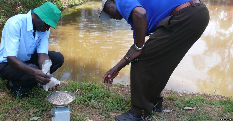 Fishfarm solutions training for Fish pond fertilization
